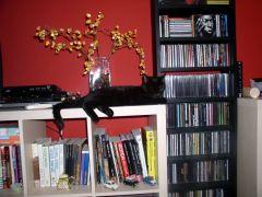 Cool Cat Diffuser