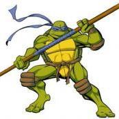 kornjaca rade